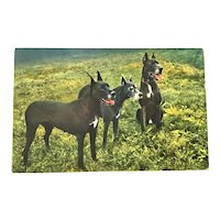 Postcard Great Dane Trio Switzerland Unposted