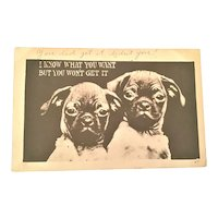 Postcard Two Pug Puppies I Know What You Want But You Won't Get It 1910