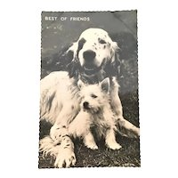 Vintage Postcard Best of Friends Dogs