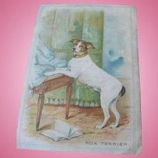 1907 Postcard Print of Posed Fox Terrier Dog