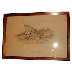 1800's J. Gould and H.C. Richter Framed Hand Colored Lithograph Australian Birds Hullmandel and Walton Imp. Ammoperdix Bonhami