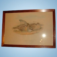 1800's J. Gould and H.C. Richter Framed Hand Colored Lithograph Australian Birds Hullmandel and Walton Imp. Ammoperdix Bonhami