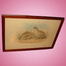 1800's Gould and Richter Hand Colored Lithograph Australian Birds Hullmandel and Walton Imp. Ammoperdix HEYI