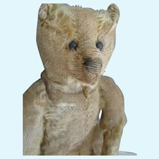 "Antique Steiff Bear, 10"" Honey Beige, Carson"