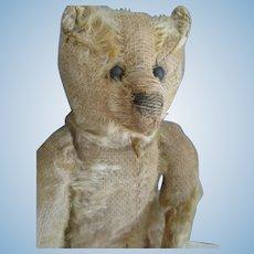 """Antique Steiff Bear, 10"""" Honey Beige, Carson"""