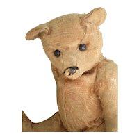 "Antique 12"" American Apricot Teddy Bear, Taffy."
