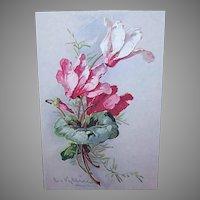 C.1960 CATHERINE KLEIN Postcard - Pale Pink Orchids!