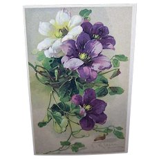 C.1960 CATHERINE KLEIN Postcard -Gorgeous Lavender, White & Purple Flowers!