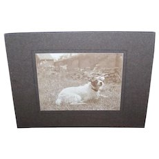 Vintage Photograph - Dog Photo, Terrier Lying on Grass, Back Yard