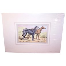Vintage C.1931 French Matted P. Mahler Colored Photogravure of a Pair of Deer Hounds