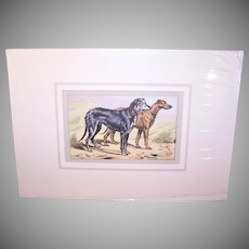 Vintage FRENCH PRINT - P. Mahler Colored Photogravure of a Pair of Deer Hounds, Matted