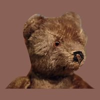 ** Steiff Bear Dark color ***
