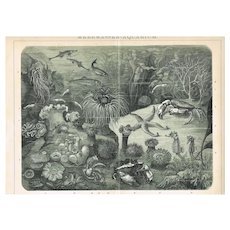 Aquarium: Decorative Lithograph from 1898. 12 x 10