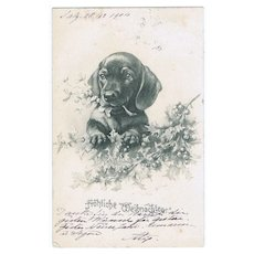Vintage Postcard with Dachshund 1904 - Red Tag Sale Item