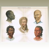 Humans Race: Old Chromo Lithograph 1882