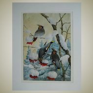 Watercolour with  Waxwings  in Winter