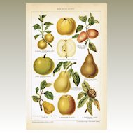 Pomaceous Fruit. Antique Chromo Lithograph 1899