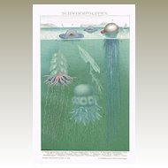 Swimming Polyps. Chromo Lithograph 1898