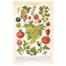 Berries: Old decorative Chromo Lithograph from 1898