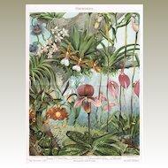 1898: Orchids. Decorative Chromo Lithograph