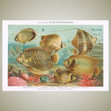 Two Antique Lithographs with Fishes 1900