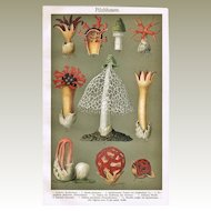 Mushrooms in Bloom: Decorative, Antique Chromo Lithograph