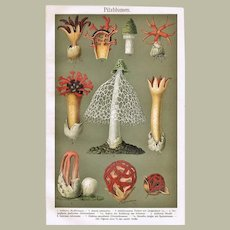 Mushrooms in Bloom: Decorative, Antique Chromo Lithograph