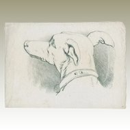 Authentic Drawing of a Dog's Head 1885