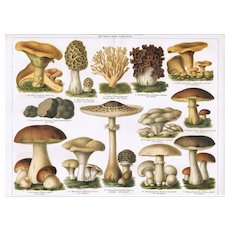 Mushrooms: 2 Antique Chrome Lithographs from 1898
