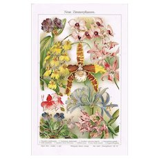 Orchids Fine Chromo Lithograph from 1898
