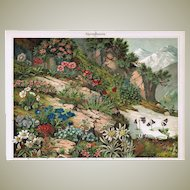 Alpine Flowers Antique Lithograph from 1898