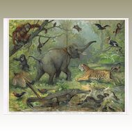 Oriental Fauna Decorative Lithograph from 1902 with 17 Animals