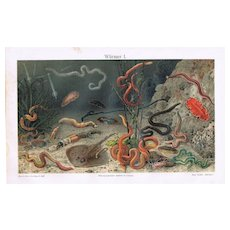 Worms. Decorative old Chromo Lithograph from 1902.