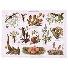 Parasitic Plants Decorative Lithoraph from 1902. 12 Plants