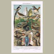 Bridal Gowns: Animals in Mating Season. Old Lithographs from 1902