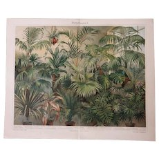 Two antique Lithographs with Plants 1898
