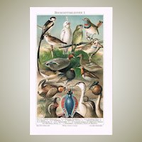 Wedding Gowns of Birds, Ducks, Reptiles Two decorative Chromo Lithographs 1899
