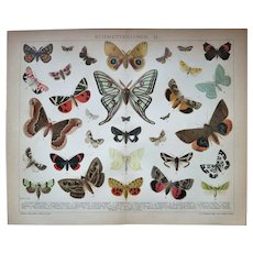 Butterflies Two Antique Chromo Lithographs - Red Tag Sale Item
