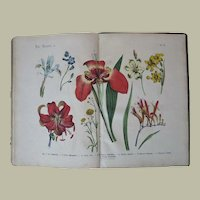 Antique Book with many Lithographs c. 1870 Carl Hoffmann