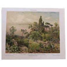 Mediterranean Flora. Antique Chrome Lithograph from 1898