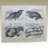 Seal. Antique Chrome Lithograph from 1897