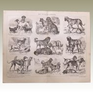 Breed of Dogs Antique Graphic from 1898