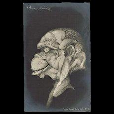 Darwins Theory Funny Metamorphic Vintage Postcard
