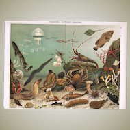 Aquarium Two Antique Chromo Lithographs