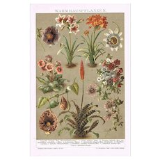 Hot House Plants Chromo Lithograph from 1900