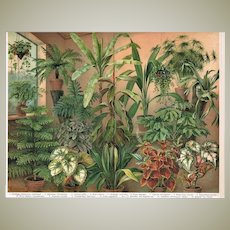 Antique Chromo Lithograph with green Plants 1898