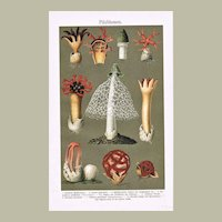 Mushrooms in Full Bloom: Antique Chromo Lithograph 1898