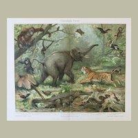 Decorative Lithograph Oriental Fauna 17 Animals 1900