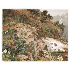 Antique Lithograph with Alpine Flowers 1902