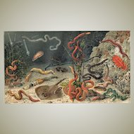Very decorative old Chromo Lithograph with Worms from 1900